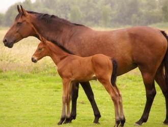 马的常见疾病防治方法